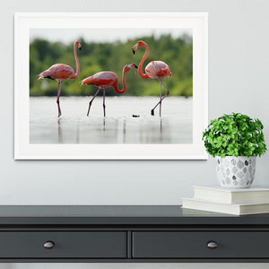 The pink Caribbean flamingo Framed Print - Canvas Art Rocks - 5