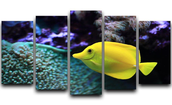 The yellow fish 5 Split Panel Canvas