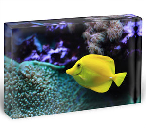 The yellow fish Acrylic Block - Canvas Art Rocks - 1