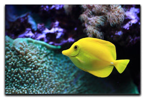 The yellow fish Canvas Print or Poster  - Canvas Art Rocks - 1