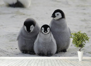 Three Emperor Penguin Chicks Together Wall Mural Wallpaper - Canvas Art Rocks - 4