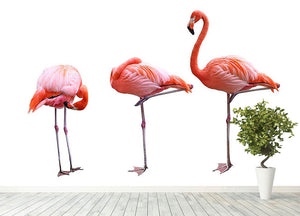 Three flamingo birds isolated on white background Wall Mural Wallpaper - Canvas Art Rocks - 4