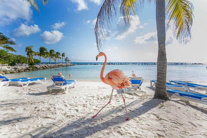 Three flamingos on the beach Wall Mural Wallpaper