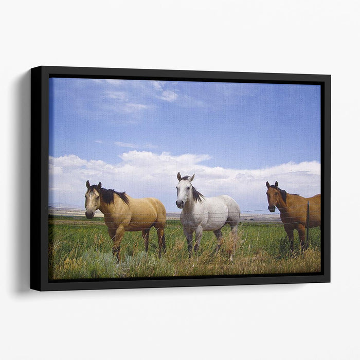 Three horses of a different color Floating Framed Canvas