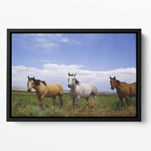 Three horses of a different color Floating Framed Canvas - Canvas Art Rocks - 2