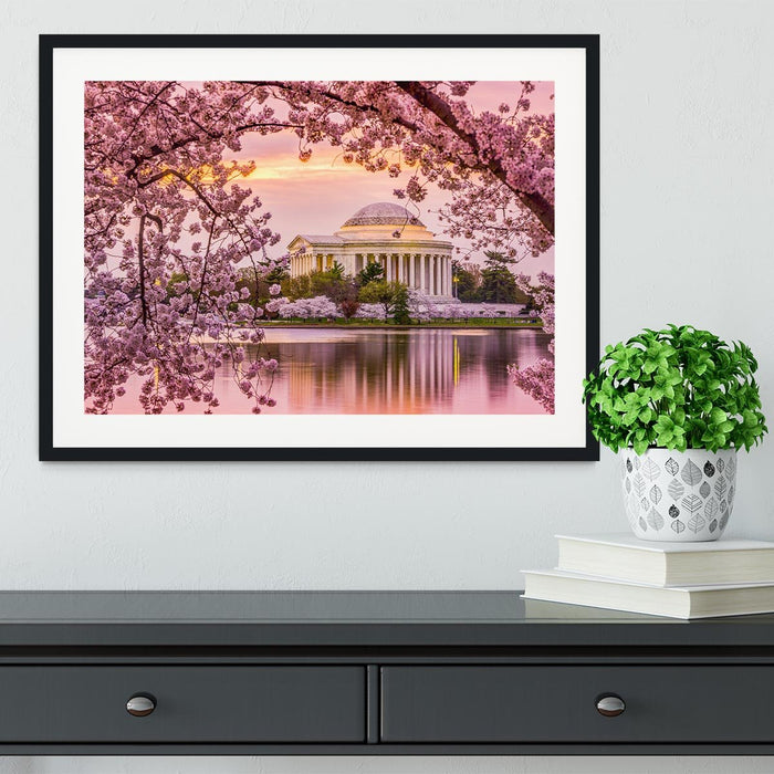 Tidal Basin and Jefferson Memorial cherry blossom season Framed Print