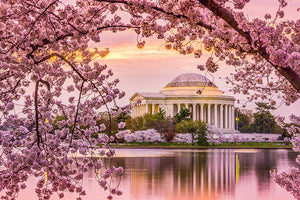 Tidal Basin and Jefferson Memorial cherry blossom season Wall Mural Wallpaper - Canvas Art Rocks - 1