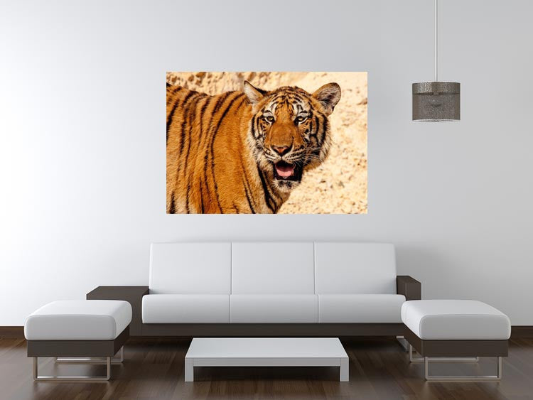 Tiger In The Heat Print - Canvas Art Rocks - 4