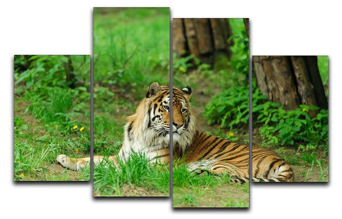 Tiger on the green grass 4 Split Panel Canvas