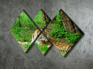 Tiger on the green grass 4 Square Multi Panel Canvas - Canvas Art Rocks - 2