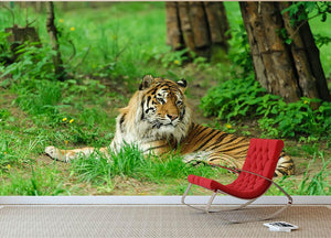 Tiger on the green grass Wall Mural Wallpaper - Canvas Art Rocks - 2