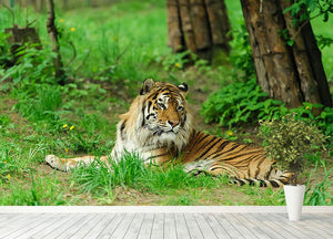 Tiger on the green grass Wall Mural Wallpaper - Canvas Art Rocks - 4
