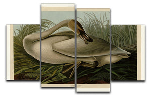 Trumpeter_Swan by Audubon 4 Split Panel Canvas - Canvas Art Rocks - 1