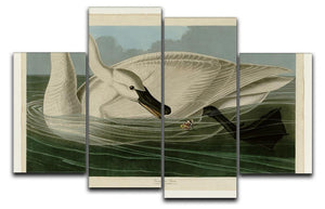 Trumpeter Swan by Audubon 4 Split Panel Canvas - Canvas Art Rocks - 1