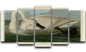 Trumpeter Swan by Audubon 5 Split Panel Canvas - Canvas Art Rocks - 1