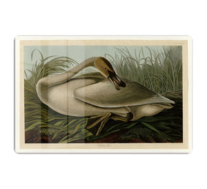 Trumpeter_Swan by Audubon HD Metal Print - Canvas Art Rocks - 1