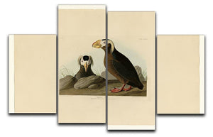 Tufted Auk by Audubon 4 Split Panel Canvas - Canvas Art Rocks - 1