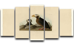 Tufted Auk by Audubon 5 Split Panel Canvas - Canvas Art Rocks - 1
