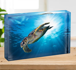 Turtle dive Acrylic Block - Canvas Art Rocks - 2