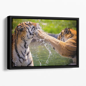 Two adult tigers at play in the water Floating Framed Canvas - Canvas Art Rocks - 1