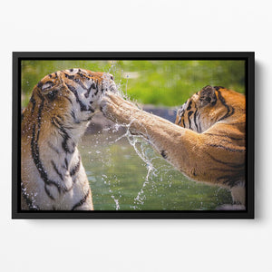 Two adult tigers at play in the water Floating Framed Canvas - Canvas Art Rocks - 2