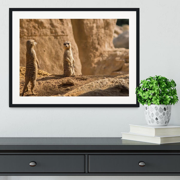 Two alert Meerkats in the desert Framed Print
