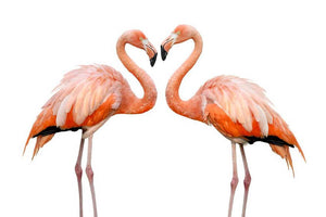 Two beautiful flamingos in love Wall Mural Wallpaper - Canvas Art Rocks - 1