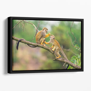 Two common squirrel monkeys Floating Framed Canvas - Canvas Art Rocks - 1
