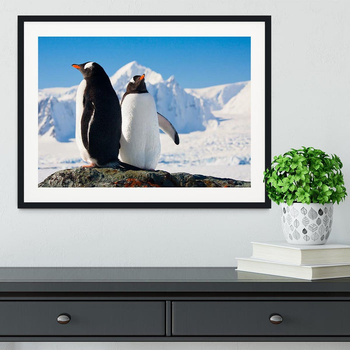 Two penguins dreaming together sitting on a rock Framed Print