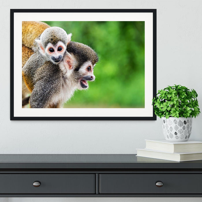 Two squirrel monkeys Framed Print
