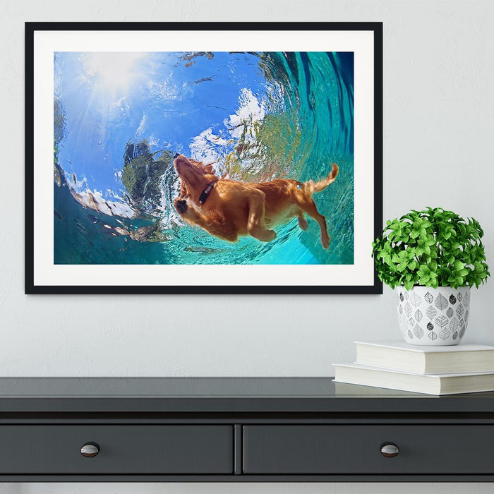 Underwater photo of golden labrador retriever puppy Framed Print
