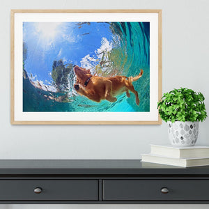 Underwater photo of golden labrador retriever puppy Framed Print - Canvas Art Rocks - 3