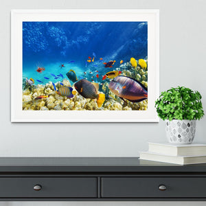 Underwater world Framed Print - Canvas Art Rocks - 5