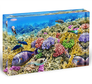 Underwater world with corals and tropical fish Acrylic Block - Canvas Art Rocks - 1