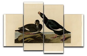 Velvet Duck by Audubon 4 Split Panel Canvas - Canvas Art Rocks - 1