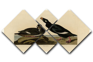 Velvet Duck by Audubon 4 Square Multi Panel Canvas - Canvas Art Rocks - 1