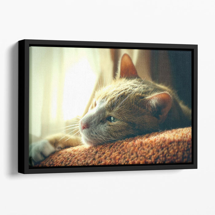 Very Sad Red Cat Floating Framed Canvas