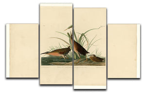 Virginia Rail by Audubon 4 Split Panel Canvas - Canvas Art Rocks - 1