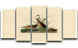 Virginia Rail by Audubon 5 Split Panel Canvas - Canvas Art Rocks - 1