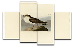 Wandering Shearwater by Audubon 4 Split Panel Canvas - Canvas Art Rocks - 1