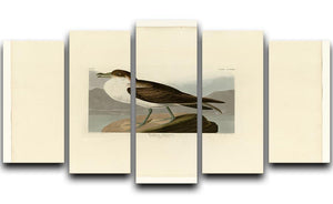 Wandering Shearwater by Audubon 5 Split Panel Canvas - Canvas Art Rocks - 1