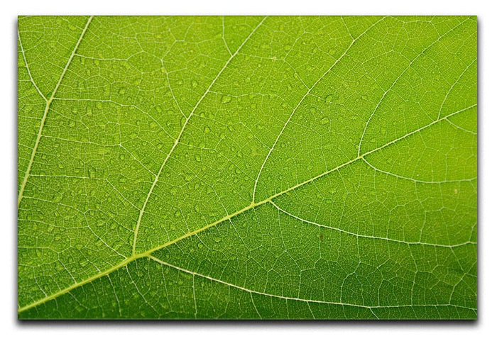 Detailed Wet Leaf Canvas Print or Poster