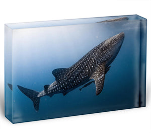 Whale Shark very near Acrylic Block - Canvas Art Rocks - 1