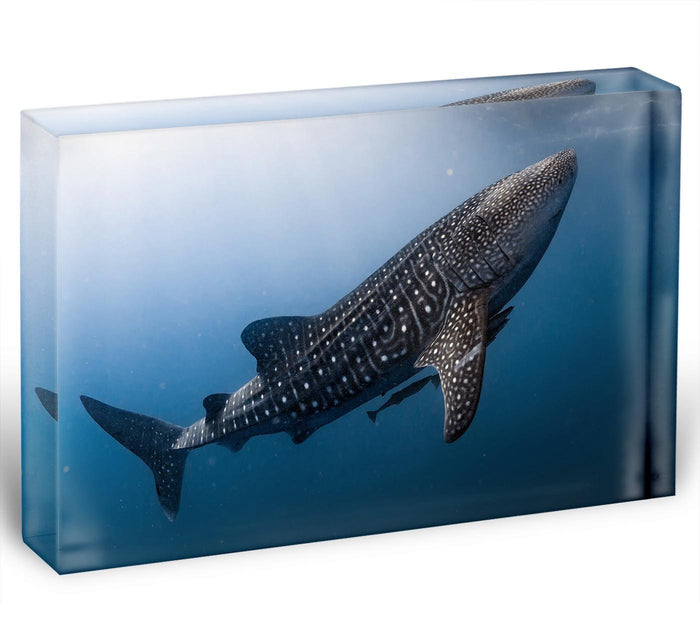 Whale Shark very near Acrylic Block