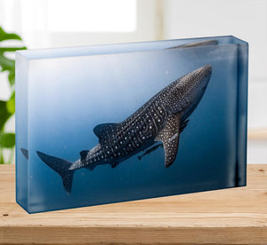 Whale Shark very near Acrylic Block - Canvas Art Rocks - 2