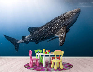 Whale Shark very near Wall Mural Wallpaper - Canvas Art Rocks - 2