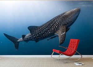 Whale Shark very near Wall Mural Wallpaper - Canvas Art Rocks - 3