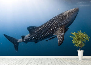 Whale Shark very near Wall Mural Wallpaper - Canvas Art Rocks - 4