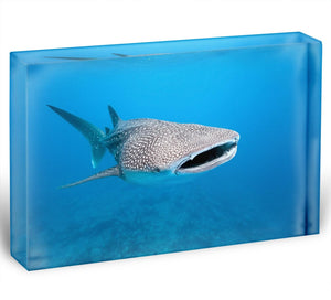 Whale shark Acrylic Block - Canvas Art Rocks - 1