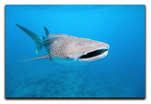 Whale shark Canvas Print or Poster  - Canvas Art Rocks - 1